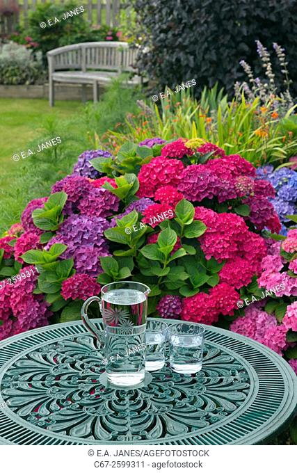 Hydrangers and garden table with water and glasses in Summer. Norfolk, England