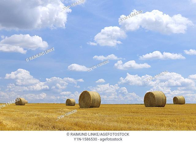 Hay Bales in field, Germany, Rhineland-Palatinate, Alzey