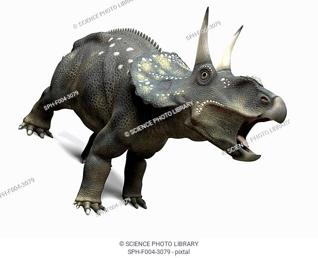 Nedoceratops dinosaur, computer artwork. This dinosaur, formerly known as Diceratops, lived 70 million years ago during the Cretaceous period