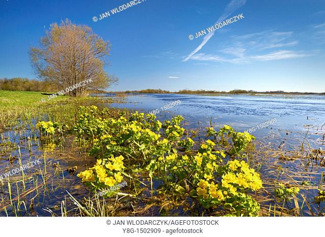 Spring floodwaters of Biebrza River, Biebrza National Park, Poland, Europe