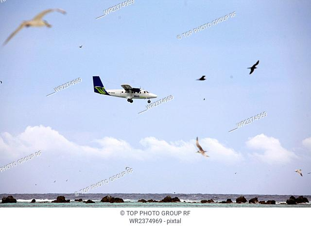 Zengmu Reef The South China Sea Malaysia Swallow Reef Bird Island gulls habitats 2009