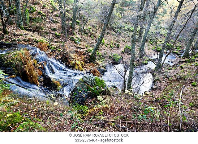 Sestil stream in Canencia birch. Sierra de Guadarrama. Madrid. Spain