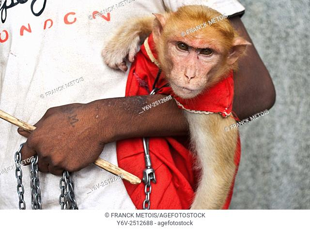 Monkey trainer holding his monkey with a chain in Karnataka state, India