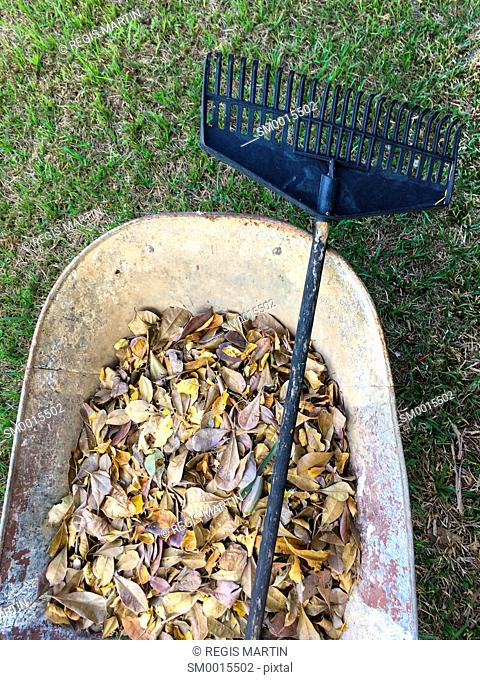 Overview of a wheelbarrow with autumn leaves and a rake