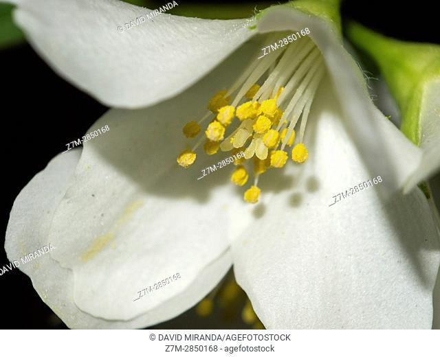 White flower with yellow stamens