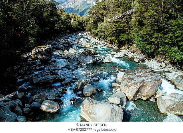 New Zealand, creek at Milford Sound