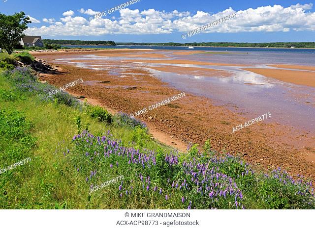 Iron rich red soil along the Northumberland Strait Lower Montague Prince Edward Island Canada