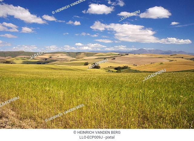 Landscape View of Farmland with Mountains in Background  Western Cape Province, South Africa