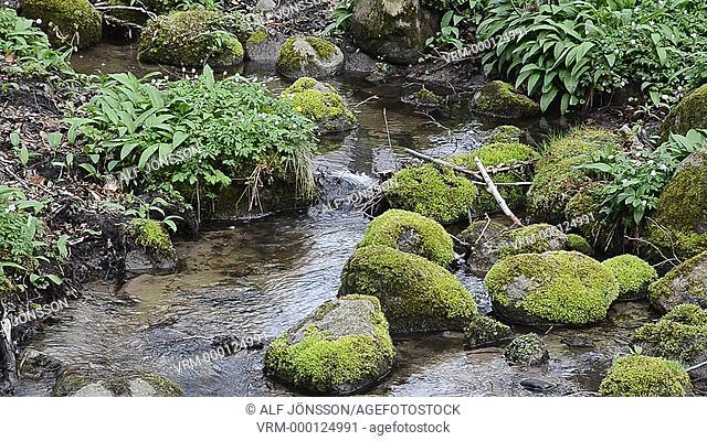 Streamlet in spring