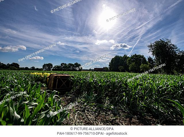 17 June 2018, Fluechtorf, Germany: A crashed hot air balloon lies in a field of corn. The crash landing of a hot air balloon near Warendorf in North...
