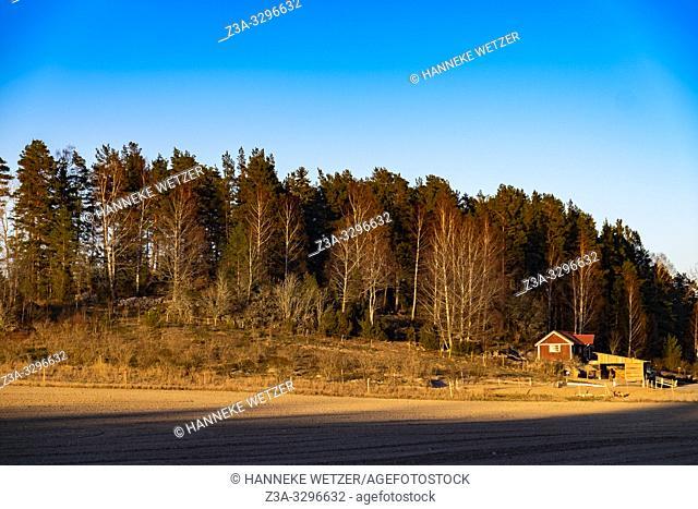 Cabin in the woods in Sweden