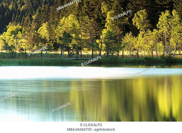Trees are reflected in the swamp of the Natural Reserve of Pian di Gembro Aprica Sondrio Valtellina Lombardy Italy Europe