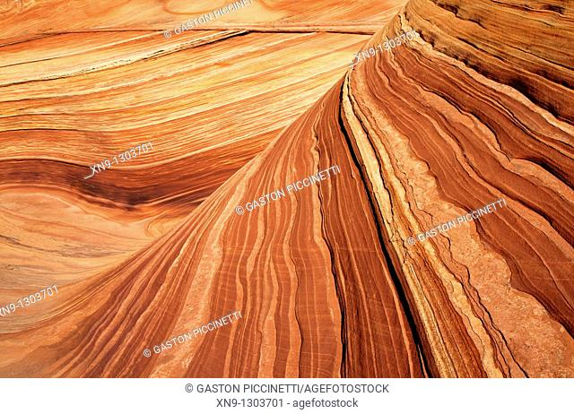 Close up of sandstone formation  The Wave, Vermilion North Coyote Buttes, Paria Canyon-Vermilion Cliffs Wilderness, Vermilion National Monument, Arizona, USA
