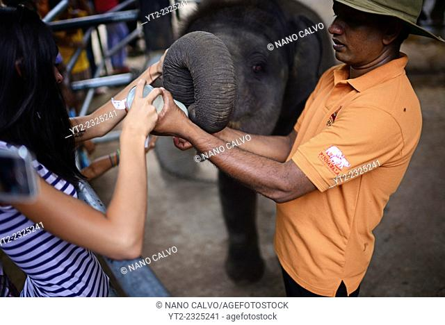 Tourists feed the baby elephants for a tip during feeding time at Pinnawala Elephant Orphanage in Sabaragamuwa Province of Sri Lanka