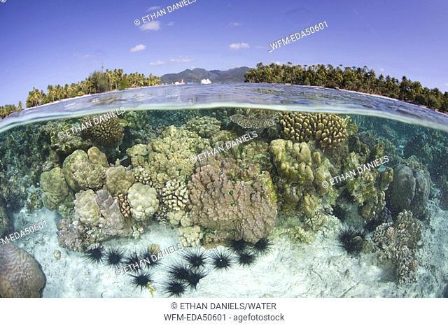 Shallow Coral Reef, Tahiti, French Polynesia