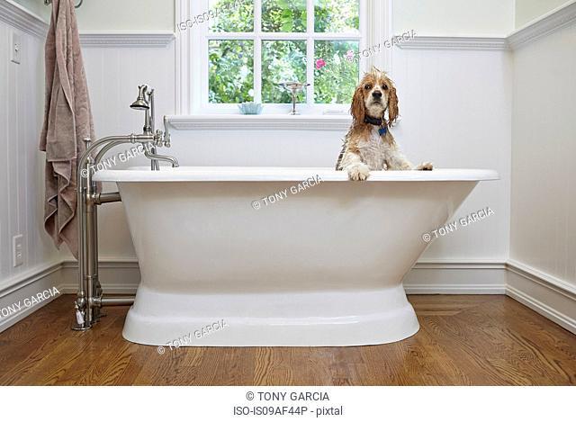 Puppy inside bathtub