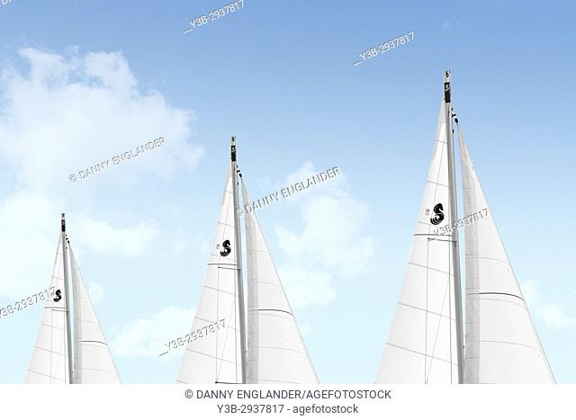 White sails on Sailboats with a dreamy blue sky and clouds