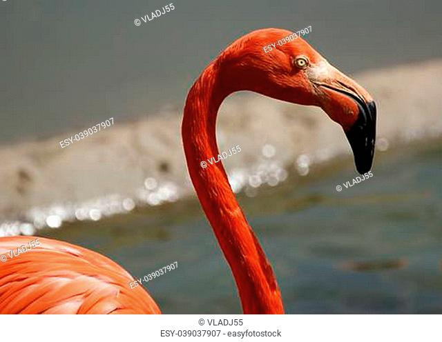 Large image of red flamingos