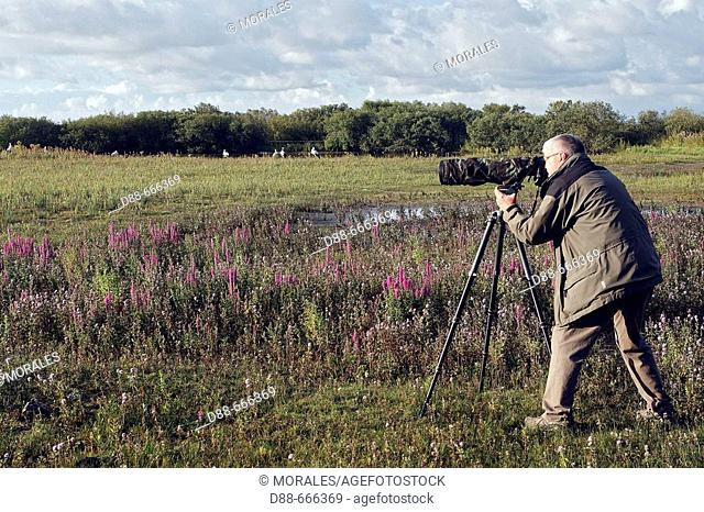 Photographer, Marquenterre regional park. Somme Bay, Picardie, France