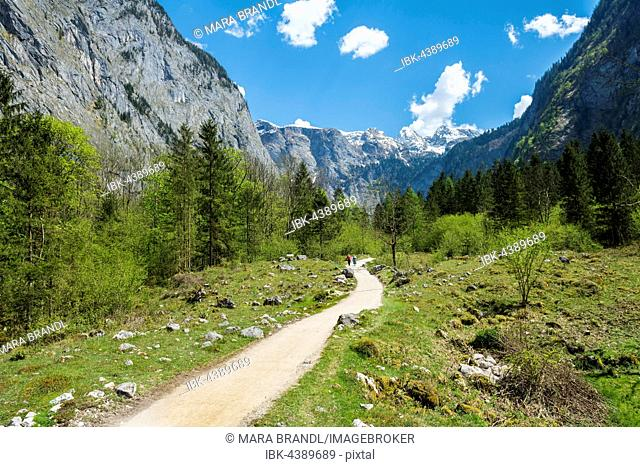 Trail from the Salet-Alm to Obersee, Salet am Königssee, Berchtesgadener Land, Upper Bavaria, Bavaria, Germany