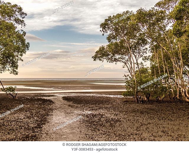 Low tide at mangrove swamps in Nudgee, Brisbane, Australia