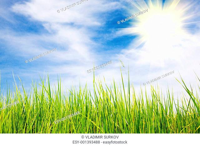 sun over the field in summer
