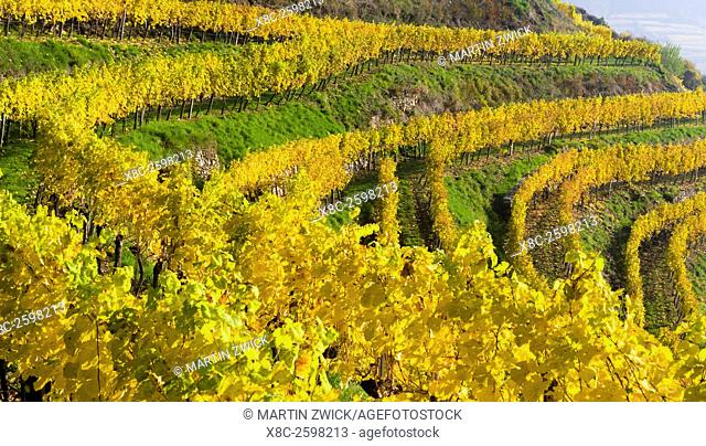 The vineyards near village Spitz in the Wachau. The Wachau is a famous vineyard and listed as Wachau Cultural Landscape as UNESCO World Heritage