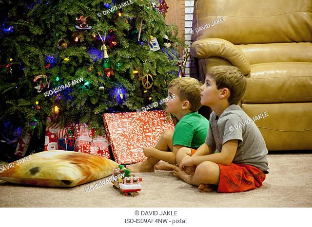 Two engrossed young brothers sitting next to xmas tree