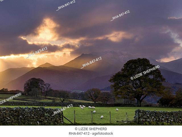 Shafts of light at sunset over the hills near Castlerigg, with sheep grazing in the nearby fields, Lake District National Park, Cumbria, England, United Kingdom