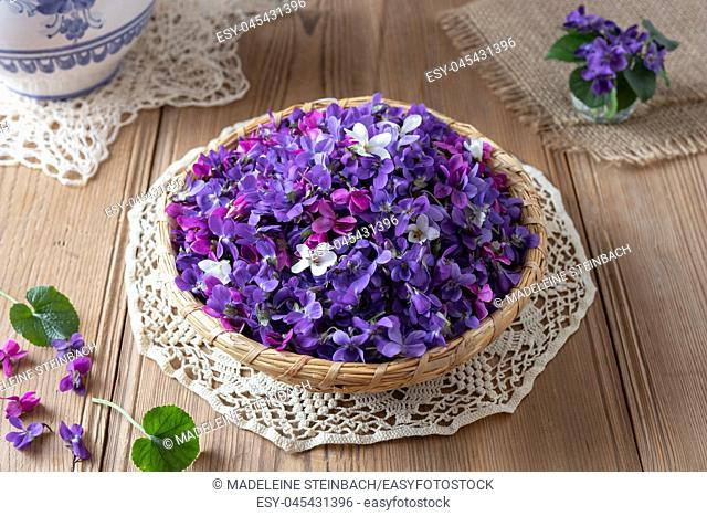 Wood violet flowers in a basket on a table