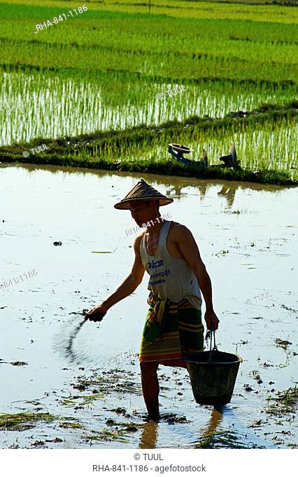 Farmer in rice field near Hpa-An, Karen State, Myanmar (Burma), Asia