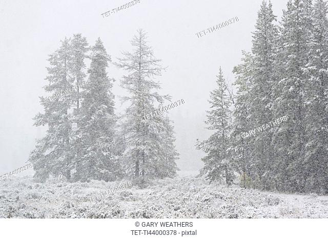 USA, Wyoming, Snowy scenery with trees in Grand Teton National Park