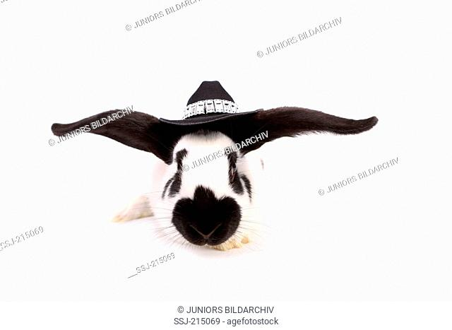 German Giant Rabbit wearing cowboy hat, seen head-on. Studio picture against a white background. Germany
