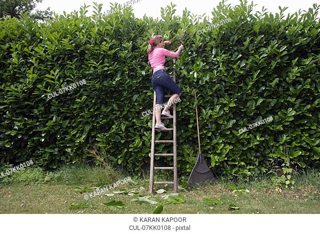 Women on ladder trimming hedge