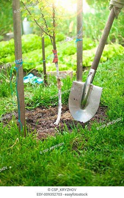 photo of tree being planted by shovel at sunny day