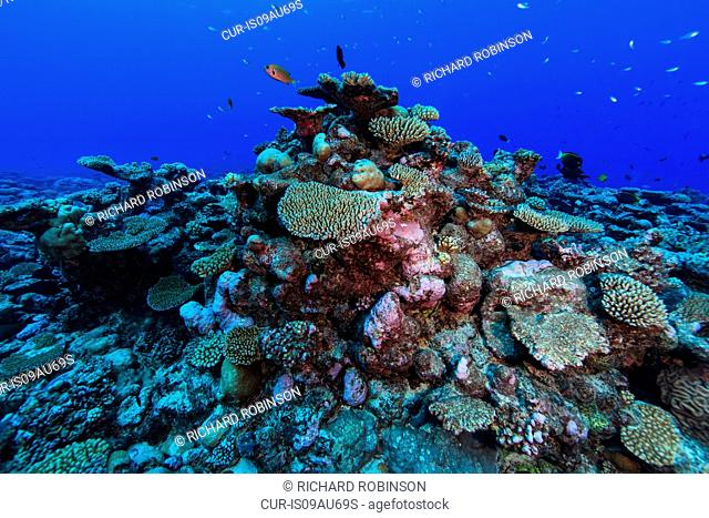Underwater view of coral reef at Palmerston Atoll, Cook Islands