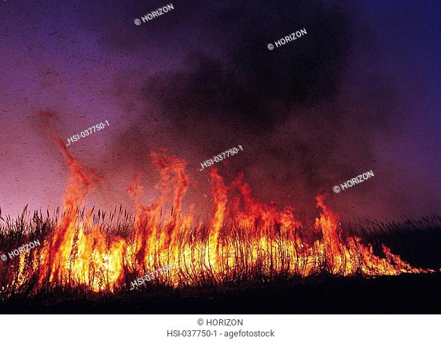 Australia, Agriculture, Queensland, Sugarcane, Burning