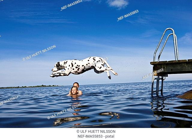 Dog jumping into the water and girls swimming Oland Sweden