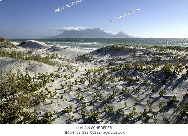Grass growing on the beach, Blaauwberg Strand, Cape Town, Western Cape Province, South Africa