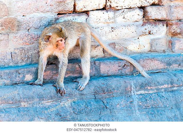 the monkey see something