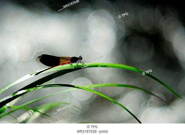 drganfly stay on the sweet grass