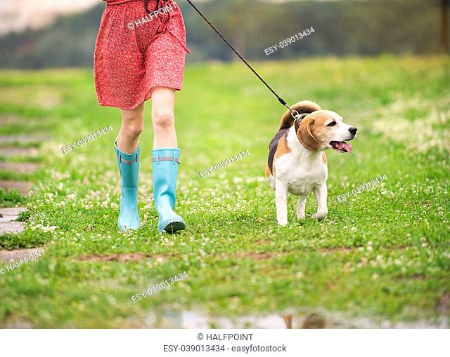 Unrecognizable young woman in dress and blue wellies walk her beagle dog in green nature