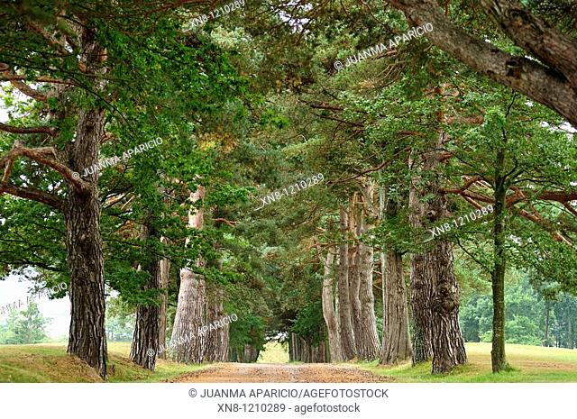 Tree lined path. Larrabea golf course, Alava, Basque Country, Spain
