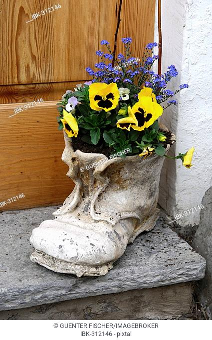 Hiking boot as flower pot with pansies and forget-me-not