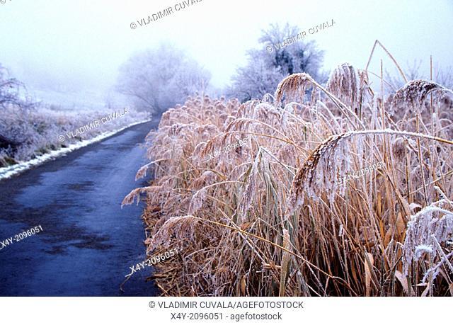 The frosty weather, Male Karpaty, Slovakia