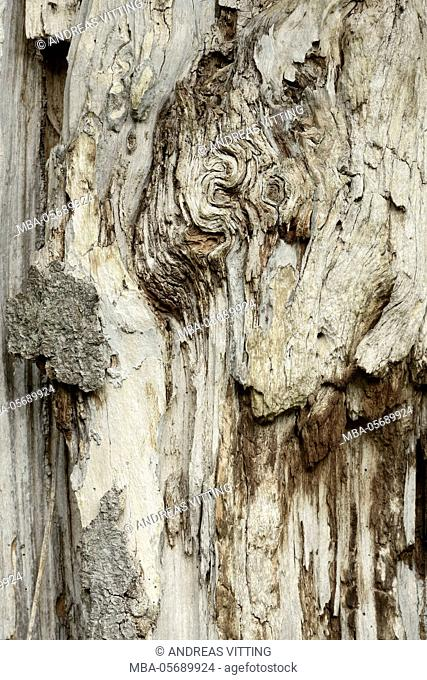 Deadwood, detail, fissures and structures, Stubnitz, National Park Jasmund, island Rügen, the Baltic Sea, Germany