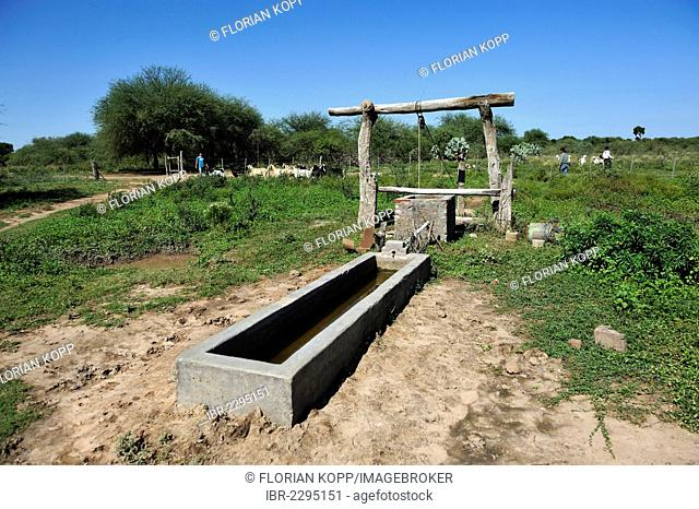 Cattle watering tank in the yard of a smallholding family, Gran Chaco, Santiago del Estero Province, Argentina, South America