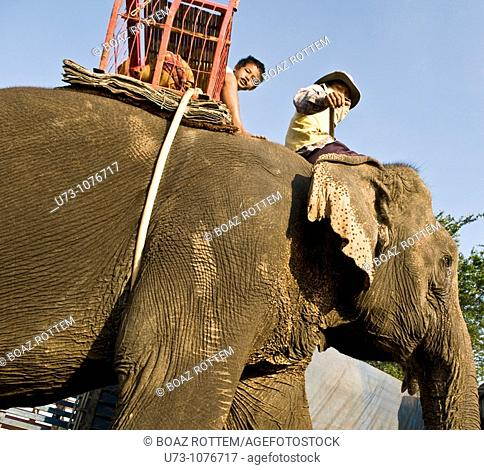 A boy sitting on an elephant on their way to the Elephant festival in Surin