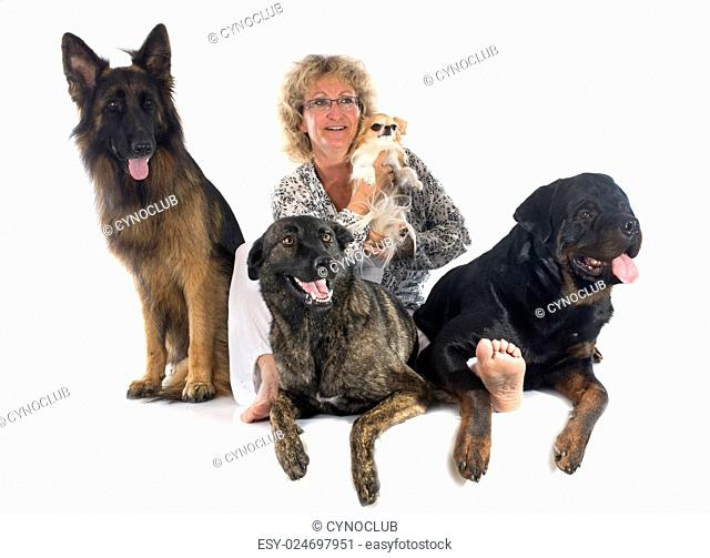 holland shepherd, chihuahua, rottweiler, and german shepherd with his owner in a studio