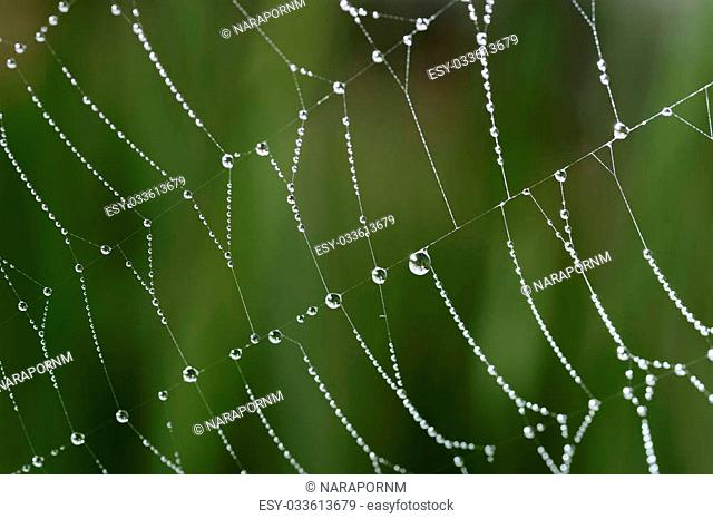 Close-up of cobweb with dew